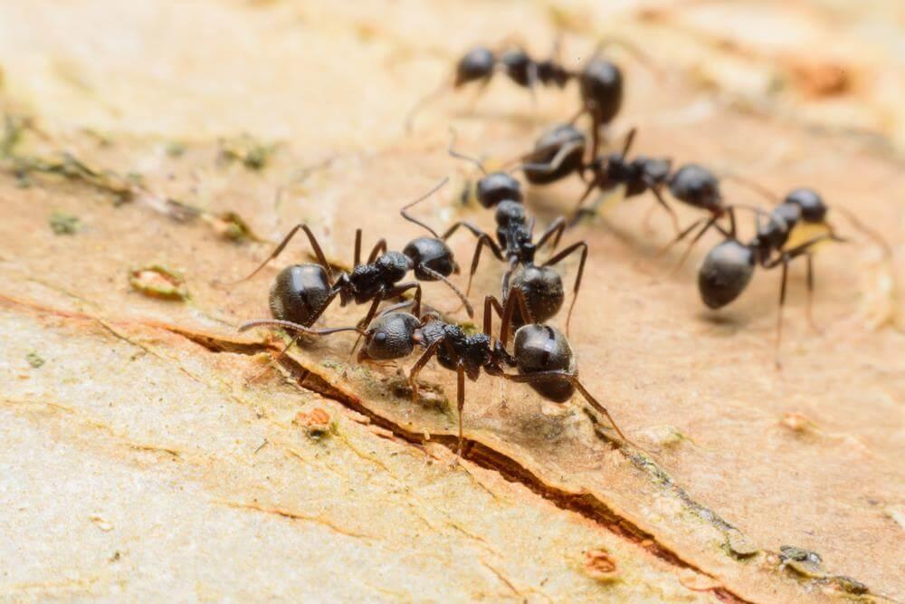 القضاء -على -النمل