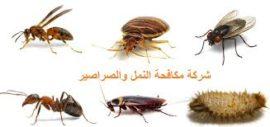 مكافحة- النمل